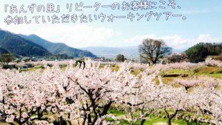 【受付終了】アンズの花のカントリーロード