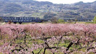 春の「千曲八景」