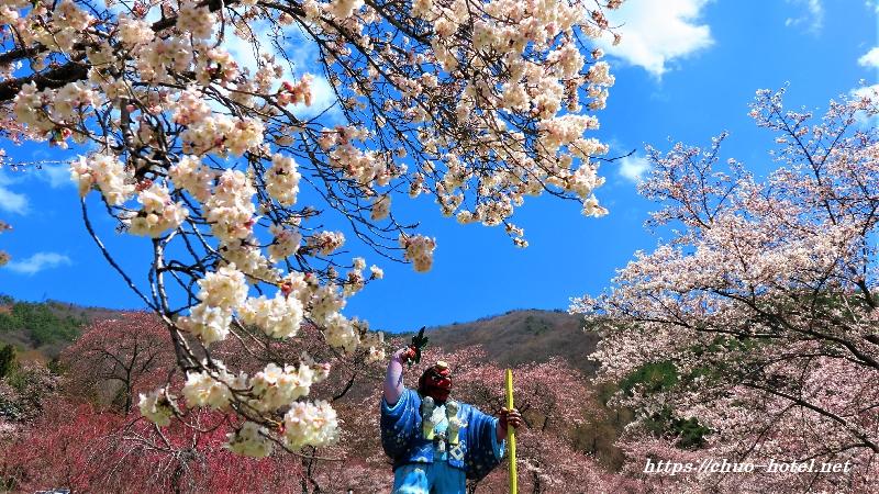 桜満開 戸倉キティパーク