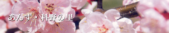 姫が愛したあんずの花。春は花の都・千曲市へ