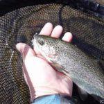 ニジマス釣りを千曲川で!釣り場のご案内&ルアー釣り教室