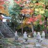【11月6日紅葉情報】各地でカエデが鮮やかに。あんずの木も色づきはじめ