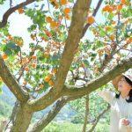 あんずの里の未来のために 森の杏にかける思い