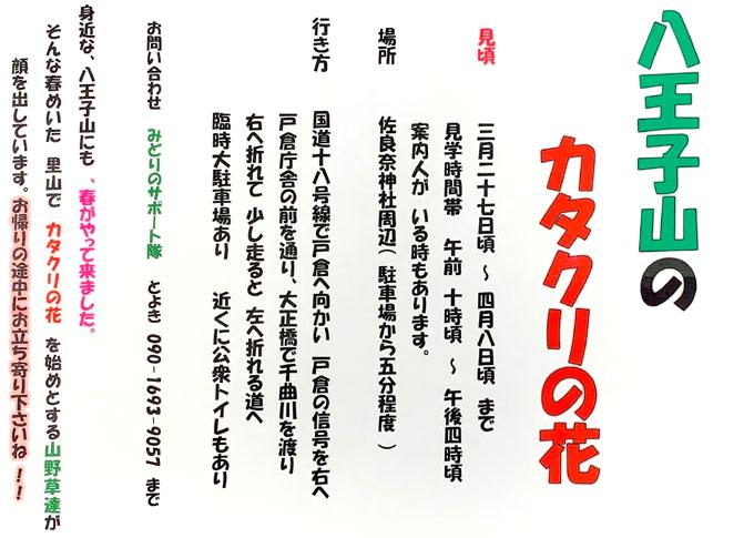 カタクリが開花(平成31年3月27日)