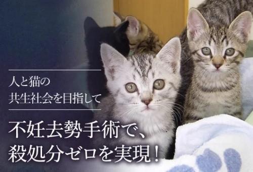 クラファン 猫